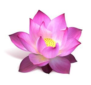 iStock_lotus